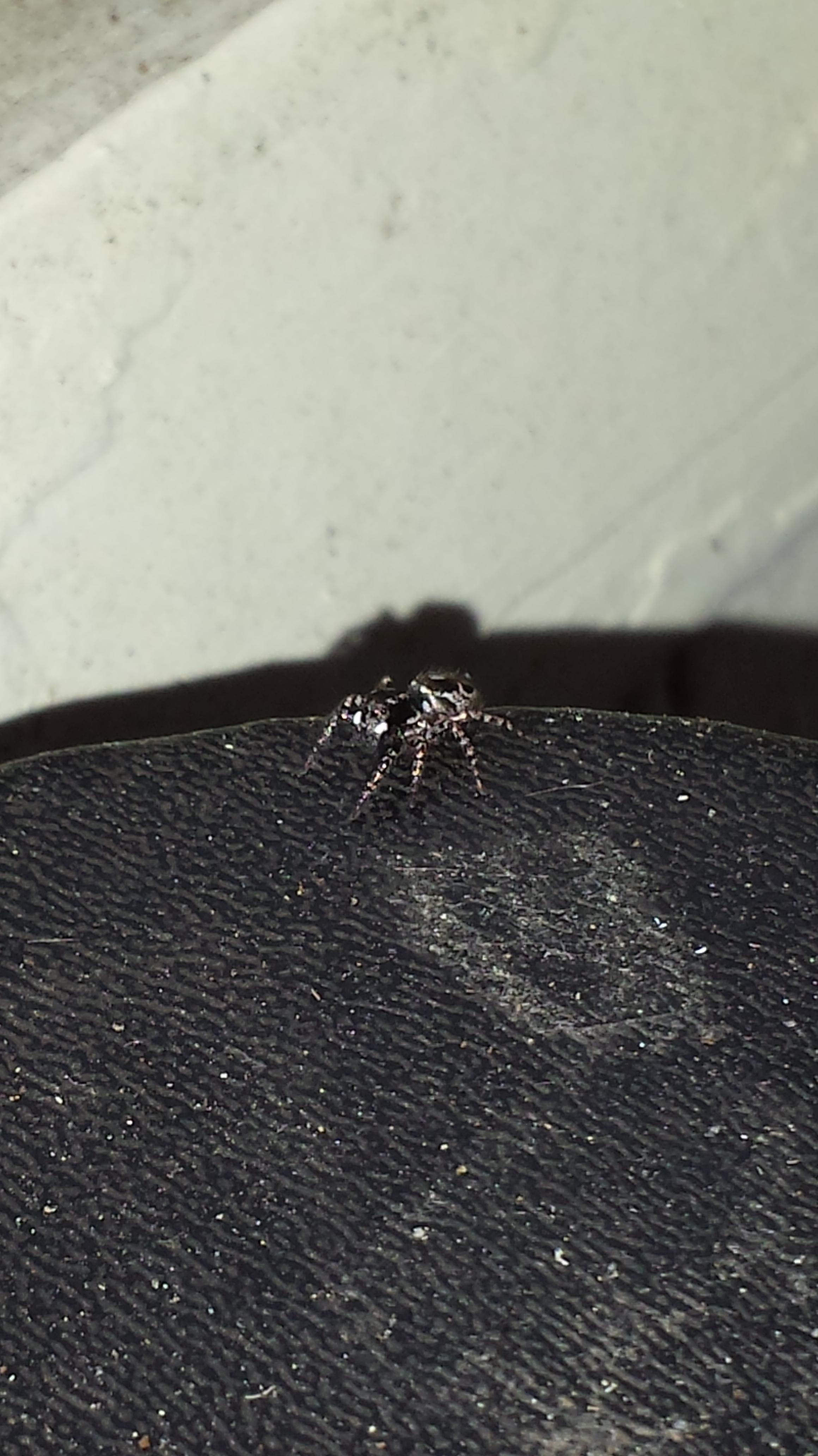 spider vincent cannataro